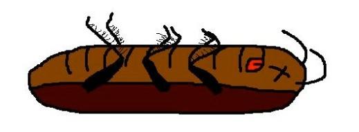 cucarachamuerta